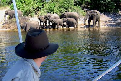 Elephants in Chobe River Boat Cruise in Chobe National Park, Botswana